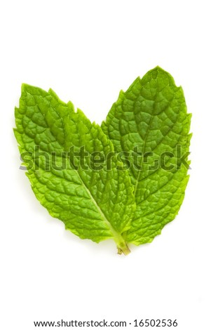 green mint leaves isolated against white background - stock photo