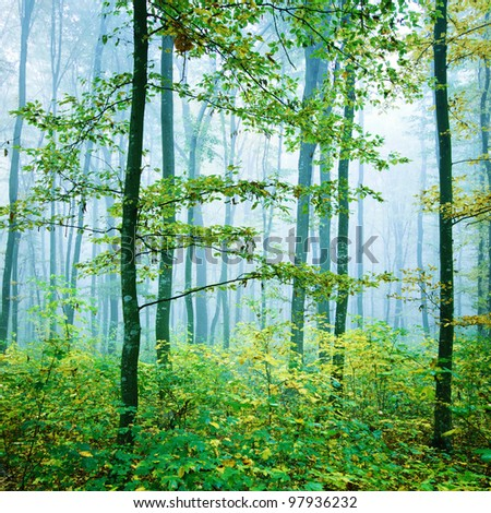 Green misty forest - stock photo
