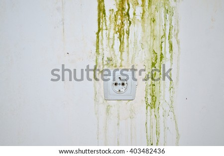 Green mold on white wall with power plug - stock photo