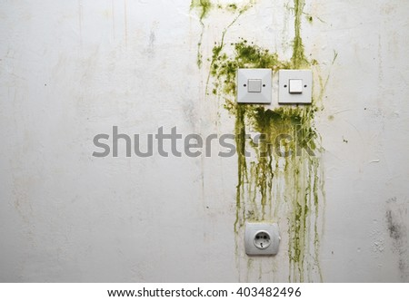 Green mold on white wall with switch sockets and power plug - stock photo