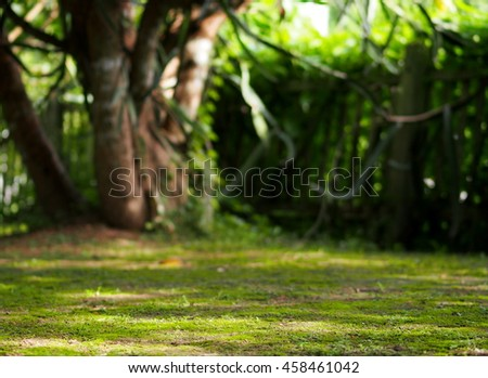 green moss and wild little small plant growth on warm brown earth floor in garden with blur large tree and fence shallow DoF for use as lonely peacefully emotion authentic natural backdrop background  - stock photo