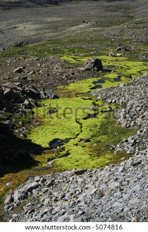 green moss at the end of glacier