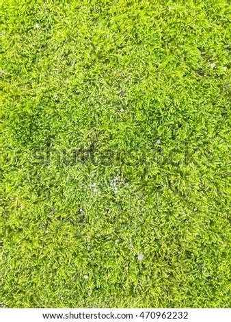 Green moss background close up
