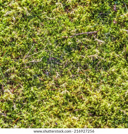 Green moss background partly frozen - stock photo