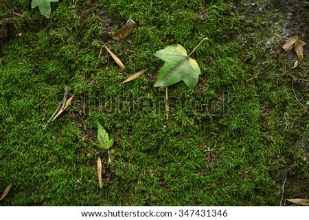 Green moss, close up - stock photo