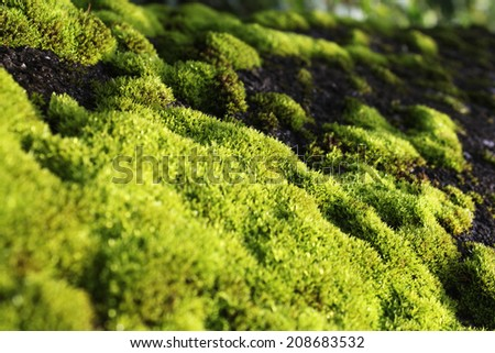 green moss covered on rocks  - stock photo