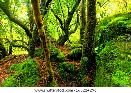 green moss covered rainforest path - stock photo