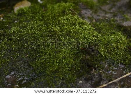 Green moss, grunge texture. - stock photo