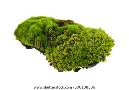Green moss isolated on white background closeup