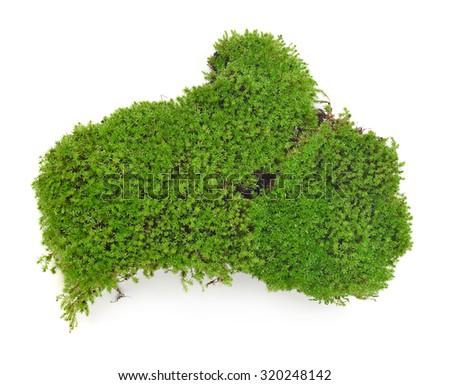 Green moss isolated on white bakground - stock photo