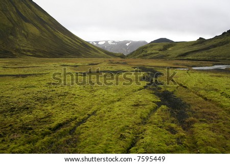 Green moss landscape with tire tracks