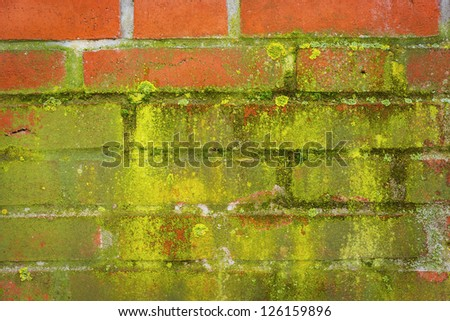 Green moss on a wall made �¢??�¢??of red bricks - stock photo