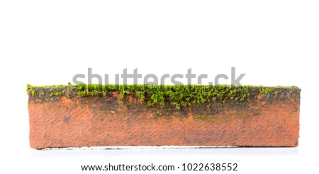 Green moss on brick on white background