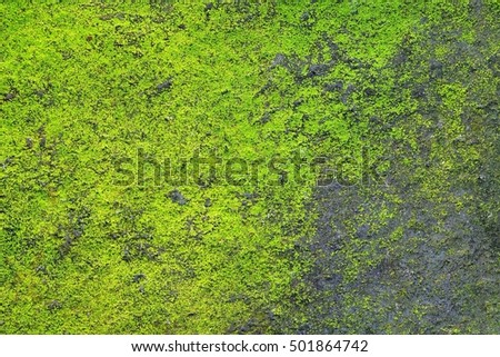 green moss on dark stone in forest background.
