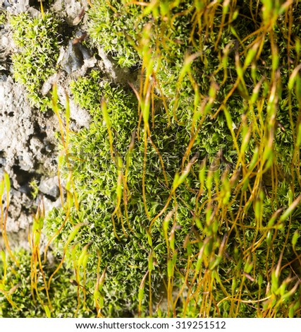 green moss on nature. close-up - stock photo