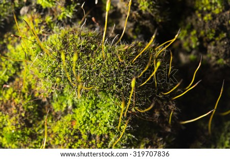green moss on nature. close-up