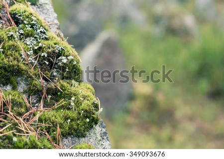 green moss on the rocks. Background.