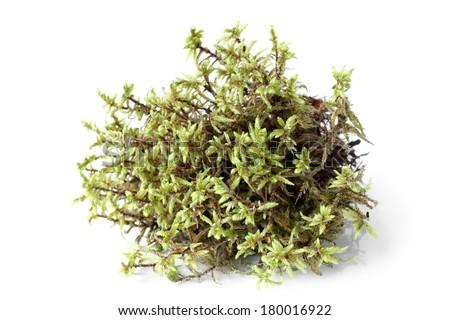 Green moss (Pleurozium schreberi) on white bakground - stock photo