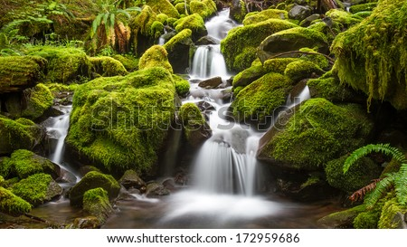 Green Moss stream in the rain forest of Olympic National Park, Washington - stock photo