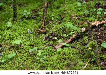 Green moss, twigs and clover for forest backgrounds.