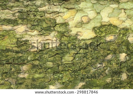 Green mossy tree bark texture closeup - stock photo