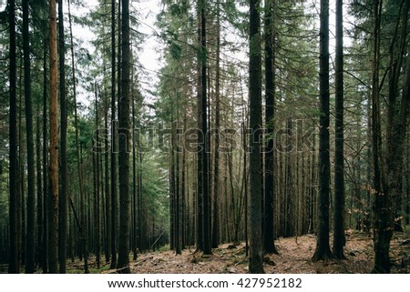 Green Mountain Forest background. Misty pine forest landscape. Travel, stone - stock photo