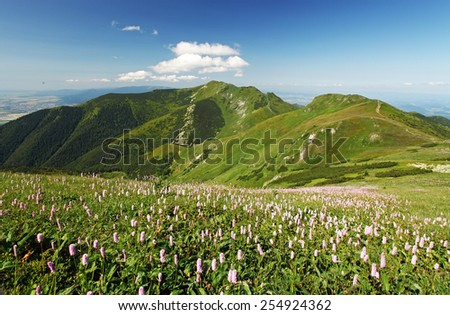 Green Mountain with wild flowers meadow - Mala Fatra - stock photo