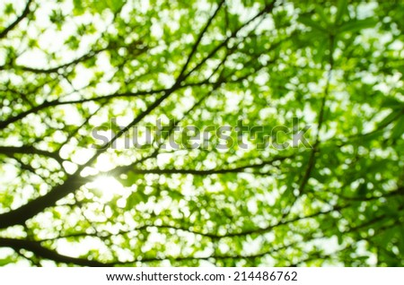 Green natural background of out of focus forest or bokeh - stock photo