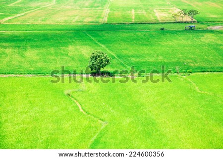 Green natural Thai rice farm from the top view for background