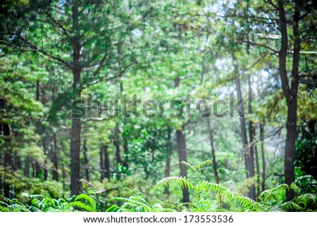 Green nature background. Jungle tropical forest wild landscape - stock photo