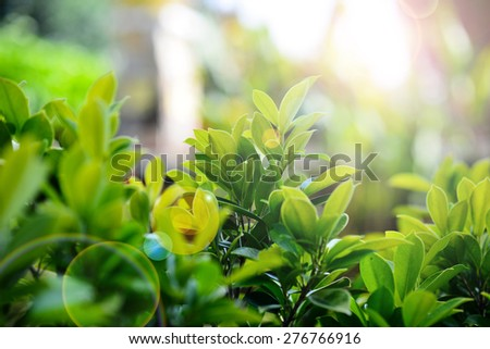 Green Nature Background with flare.Very Shallow DOF - stock photo