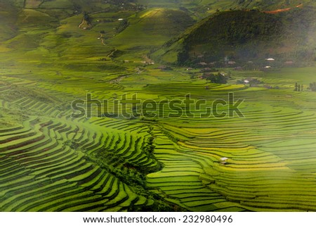 green nature of bird eye view - stock photo