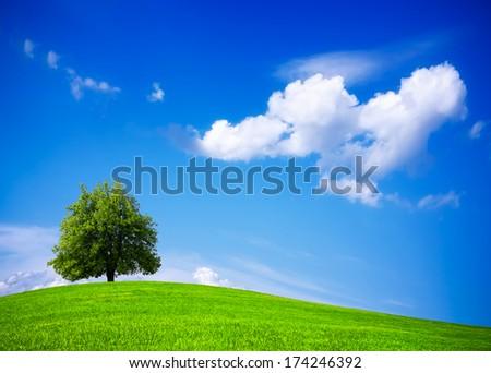 Green nature springtime - stock photo