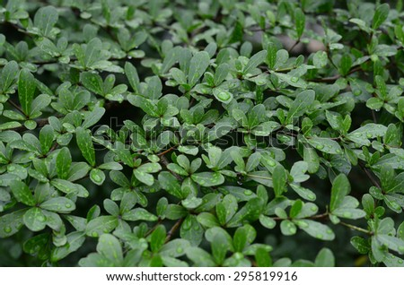 green nature wall background plant grass crop line texture leaf cover landscape - stock photo
