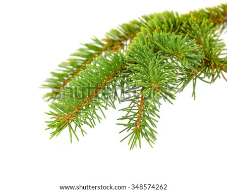 green needles on the spruce branch - stock photo