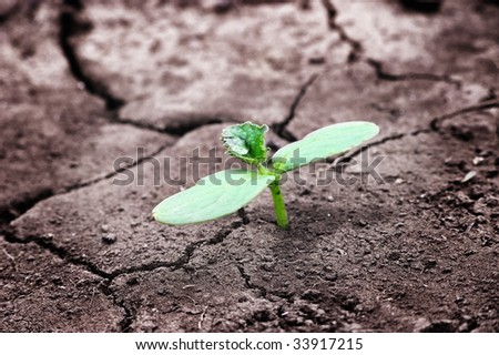 Green newborn sprout on chapped earth - stock photo