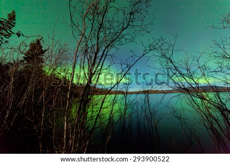 Green northern lights or Aurora borealis on starry night sky over calm surface of Lake Laberge behind shore willow bushes, Yukon Territory, Canada