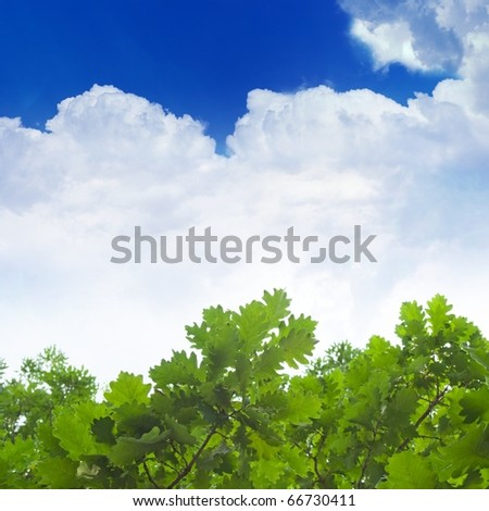 Green oak leaves, blue sky, white clouds