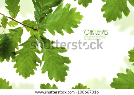 Green oak leaves frame isolated on white with copy space