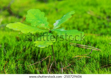 Green oak sprout on branch in autumn forest - stock photo