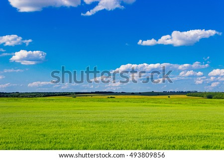 green oats field