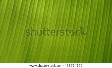 green of Leaves