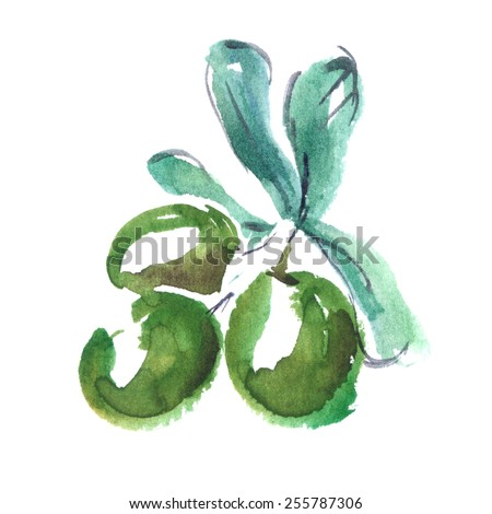 Green olive branch painted in watercolor on white isolated background - stock photo