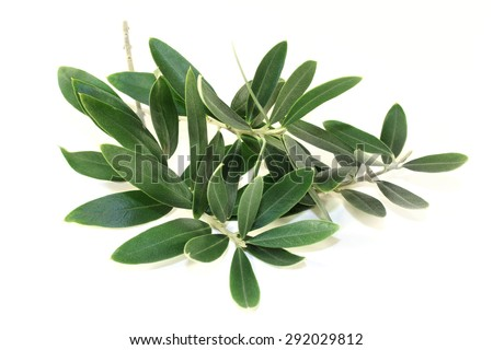 green olive branches on a bright background