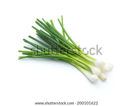 Green onion isolated on the white background - stock photo