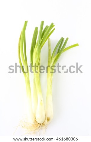 Green onion  on the white background