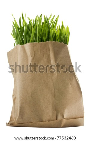 Green organic wheat grass in a brown bag. - stock photo