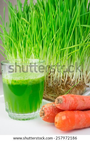 Green Organic Wheat Grass Shot ready to drink - stock photo
