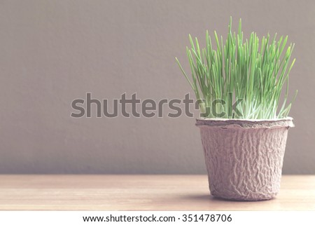 Green organic wheatgrass in the recycled paper pot on wood table and brown wall, vintage photo