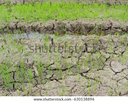 Rice plant stock images royalty free images vectors for Nature and composition of soil